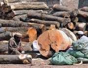 راولپنڈی: مزدور ٹال پر لکڑیاں کاٹنے میں مصروف ہے۔