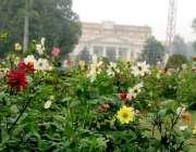 لاہور: باغ جناح میں کھلے پھولوں کا منظر۔