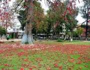 راولپنڈی: زمین پر گرے پھول دلکش منظر پیش کر رہے ہیں۔