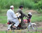 اسلام آباد: عید قرباں کی آمد کے موقع پر دوموٹر سائیکل سوار بکرا لیے ..