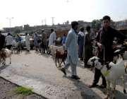 راولپنڈی: دور دراز سے لائے گئے جانور لئے بیوپاری گاہکوں کے انتظار میں ..