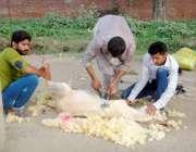 لاہور: کاریگر گرمی سے بچائے کے لیے چھتری کے بال اتار رہا ہے۔
