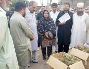 قصور: ڈپٹی کمشنر عمارہ خان سبزی و فروٹ منڈی کے دورہ کے دوران پھلوں کی ..