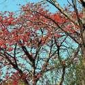 اسلام آباد: موسم بہار کی آمد پر درختوں پو کھلتی کونپلیں خوبصورت منظر پیش کر رہی ہیں۔