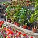 راولپنڈی: دکاندار نے مصنوعی پھلوں کے گلدستے گاہکوں کو بیچنے کے لیے سجا رکھے ہیں۔