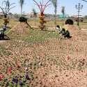 راولپنڈی: شہباز شریف پارک میں پی ایچ اے کے ملازمین پارک میں پھولوں کے پودے لگا رہے ہیں۔