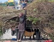 راولپنڈی: خانہ بدوش خشک لکڑیاں گدھا ریڑھی پر لوڈ کر رہا ہے۔