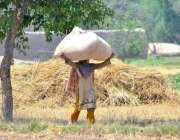 ملتان: کسان خاتون سر پر مرچوں کی گٹھری اٹھائے لیجا رہی ہے۔