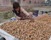 لاہور: محنت کش بچہ ریڑھی پر اخروٹ اور مونگ پھلی فروخت کررہا ہے۔
