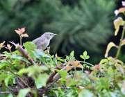 اسلام آباد: وفاقی دارالحکومت میں شاخ پر بیٹھا پرندہ دلکش منظر پیش کررہا ..