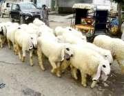 لاہور: شاہدرہ میں ایک بیوپاری چھترے فروخت کرنے کے لیے جار ہاہے۔