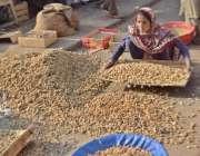 لاہور: ایک محنت کش خاتون مونگ پھلی چھانٹی کررہی ہے۔