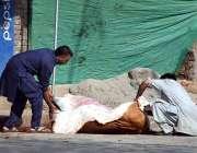 سیالکوٹ: پابندی کے باوجود سڑک کنارے ایک گائے کی کھال اتاری جا رہی ہے ..