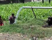 سرگودھا: نوجوان گرمی کی شدت کم کرنے کے لیے ٹیوب ویل کے پانی سے نہا رہے ..