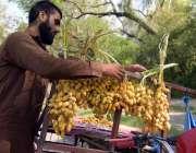 اسلام آباد: محنت کش گاہکوں کو متوجہ کرنے کے لیے تازہ کھجور سجا رہا ہے۔