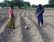 لاہور: نواحی گاؤں میں کسان کھیت ہموار کر رہے ہیں۔