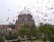 ملتان: قاسم کے قلعہ کے قریب واقعے شاہ رکن عالم کے مزار پر بے شمار کبوتر ..