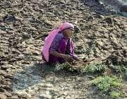 حیدر آباد: معمر دیہاتی خاتون پاتھیاں لگا رہی ہے۔