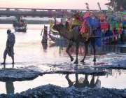 پشاور: خانہ بدوش شخص اونٹ کی سواری کے لیے گاہکوں کا منتظر ہے۔