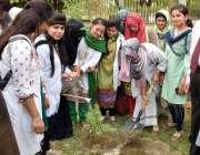 جامشورہ: لیاقت یونیورسٹی آف میڈیکل سائنسز کی طالبات پودا لگار شجر کار ..