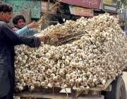 سرگودھا: ریڑھی بان لہسن فروخت کر رہا ہے۔