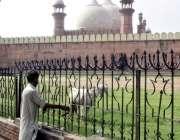لاہور: ایک شخص بادشاہی مسجدکی گراؤنڈ میں بکری باندھ رہا ہے۔
