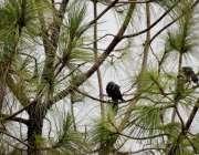 راولپنڈی:بارش کے دوران پرندے ایک درخت پر بیٹھے بارش سے لطف اندوز ہو ..