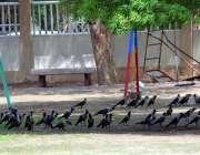 حیدر آباد: گرمی اور دھوپ کی شدت سے بچنے کے لیے کوے درختوں کے سائے میں ..