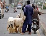 راولپنڈی: عید قربان کے لیے ایک دیہاتی مری روڈ پر قربانی کے جانور فروخت ..