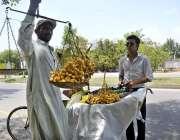 اسلام آباد: وفاقی دارالحکومت میں ایک شہری تازہ کھجوریں خرید رہاہے۔