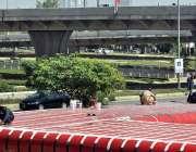 اسلام آباد: مزدور میٹرو بس کی شیلٹر کو مرمت کرنے میں مصروف ہیں۔