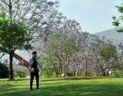 اسلام آباد: وفاقی دارالحکومت میں درختوں پر کھلے پھول خوبصورت منظر پیش ..