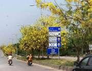 اسلام آباد: وفاقی دارالحکومت میں سڑک کنارے لگے درخت پو موسمی پھولوں ..