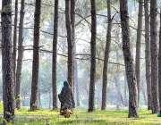 اسلام آباد: وفاقی دارالحکومت میں ایک خاتون گرین بیلٹ پر چلتے ہوئے اپنی ..