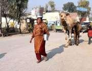 پشاور: خانہ بدوش خاتون اپنے اونٹنی کے ہمراہ دودھ فروخت کے لیے جارہی ..