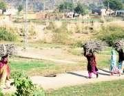 اسلام آباد: خواتین جنگل سے لکڑی کاٹ کر سر پر رکھے ایندھن کے استعمال ..