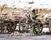 لاڑکانہ: مزدور گدھا ریڑھیوں پر اینٹیں لوڈ کر رہے ہیں۔