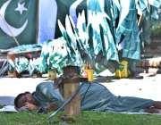 اسلام آباد: وفاقی دارالحکومت میں محنت کش اپنی تھکن دور کر رہا ہے۔