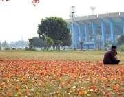 اسلام آباد: وفاقی دارالحکومت میں مقامی پارک میں گرے درختوں کے پھول ..