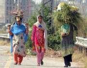 راولپنڈی: خانہ بدوش خواتین گھر کا چولہا جلانے کے لیے خشک لکڑیاں اٹھائے ..