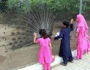پشاور: بچے باغ ناران میں مور کا ناچ دیکھ رہے ہیں۔