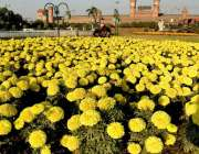 لاہور: ریلوے اسٹیشن کے سامنے پارک میں لگے پھول خوبصورت منظر پیش کررہے ..