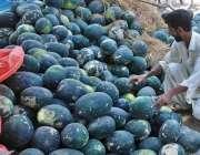 حیدر آباد: محنت کش گاہکوں کو متوجہ کرنے کے لیے تربوز سجا رہا ہے۔