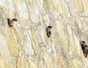 اسلام آباد: پرندے اپنے گھونسلوں میں بیٹھے دلکش منظر پیش کر رہے ہیں۔