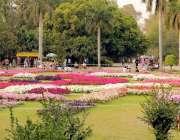 لاہور: باغ جناح میں کھلے پھول خوبصورت منظر پیش کر رہے ہیں۔