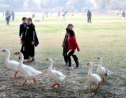 بہاولپور: بچے بطخوں کے ہمراہ چل رہے ہیں۔