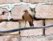 ملتان: پرندے نے چونچ میں اپنا چھوٹا سا بچا اٹھا رکھا ہے۔