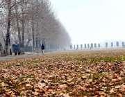 گلگت: بدلتے موسم کے باعث درختوں سے جھڑے پتے پر کشش منظرپیش کررہے ہیں۔
