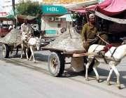 بہاولپور: محنت کش گدھا ریڑھیوں پر ریت لادھے لیجا رہے ہیں۔