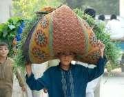 پشاور: ایک بچے اپنے سر پر بکریوں کے لیے چارہ لادھے جا رہا ہے۔